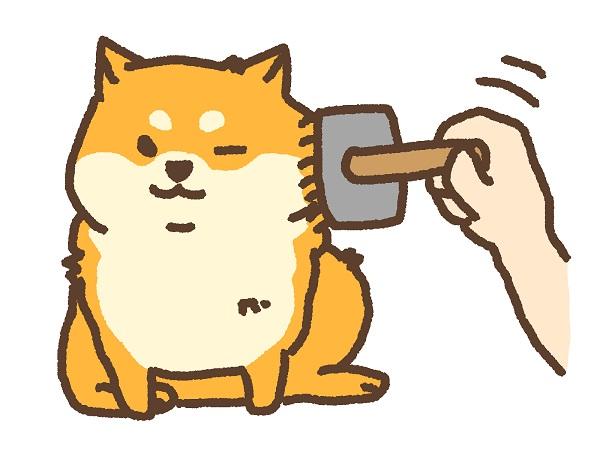 柴犬のトリミング